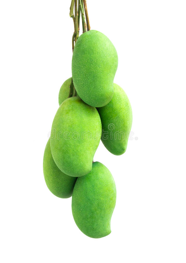 bunch of green mango on white background stock photo