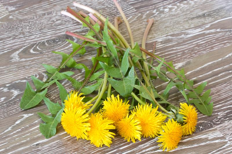 Bunch of hawkbit on a wooden table stock image