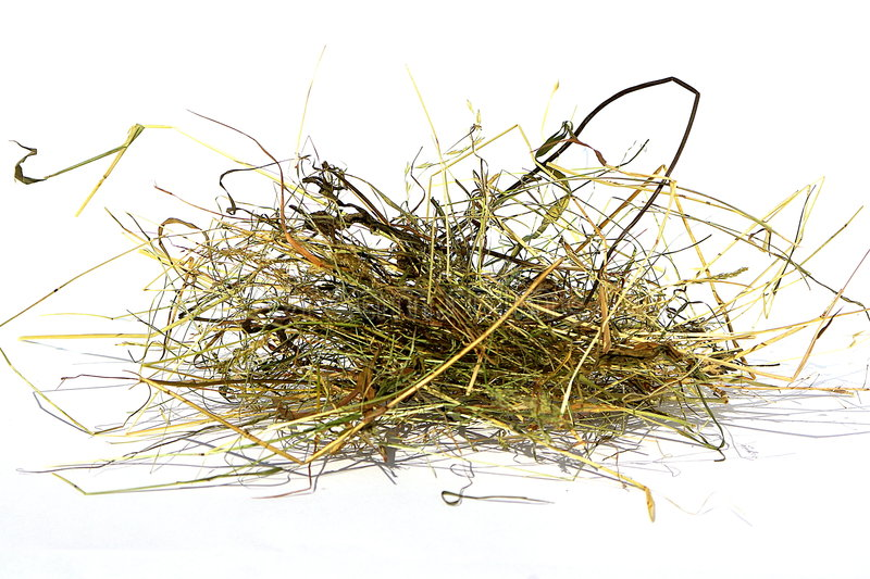 A bunch of hay stock photography