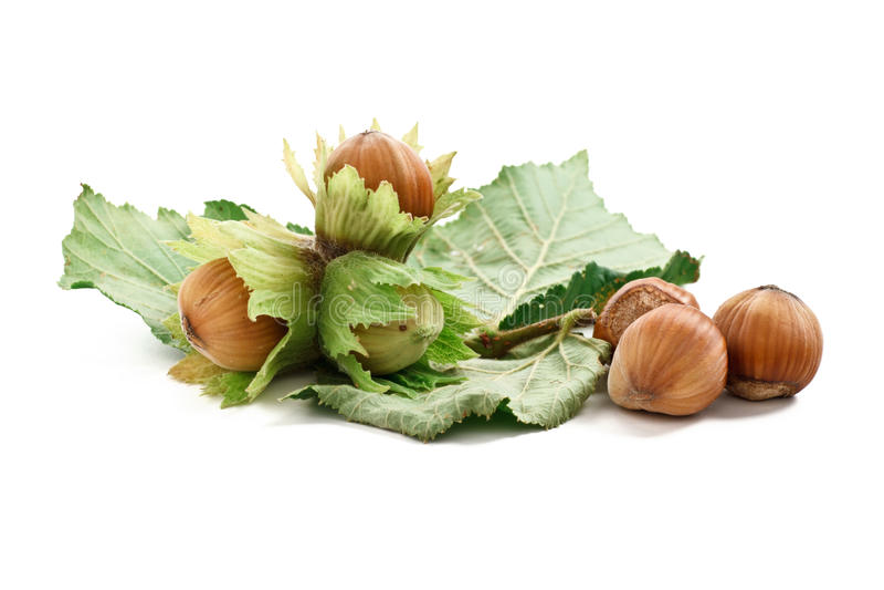 Bunch of hazelnuts royalty free stock image