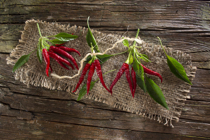 Bunch of hot pepper royalty free stock photography