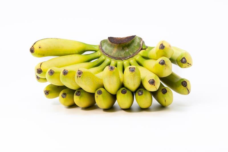 Lady finger bananas Musa acuminata royalty free stock images