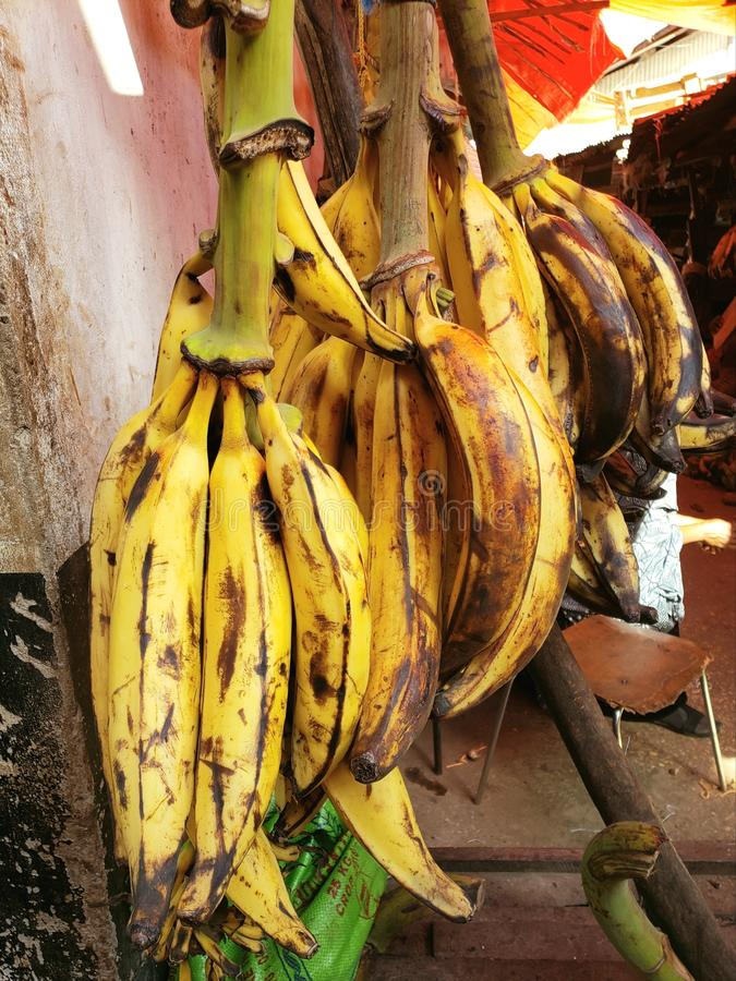 Bunch of Large Cooking Bananas,  Darajani Market, Zanzibar, Tanzania stock images