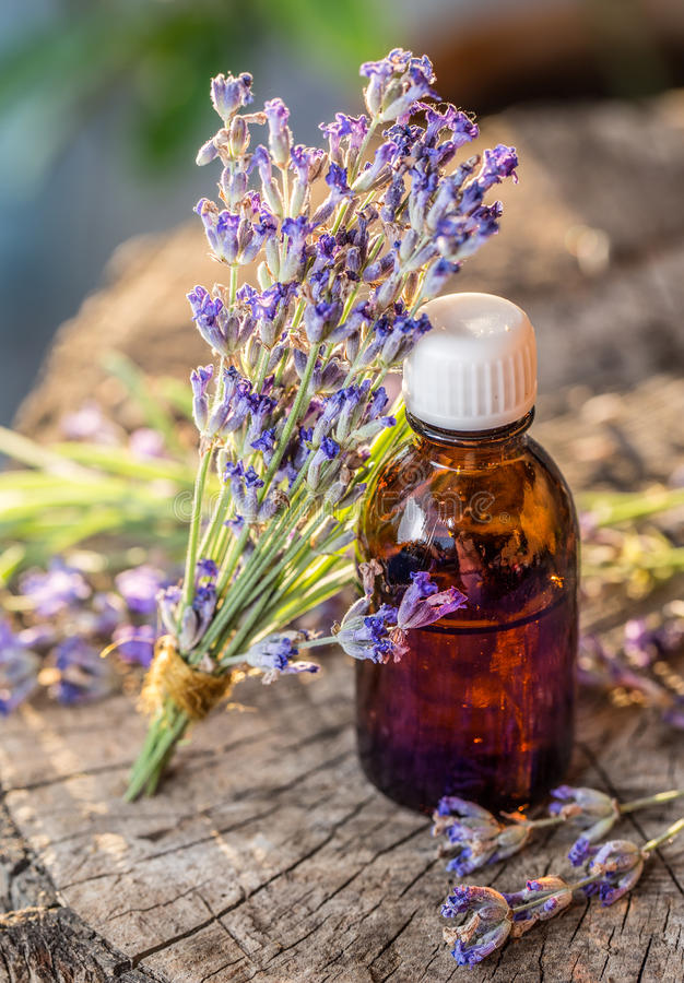 Bunch of lavandula or lavender flowers and oil bottle are on the royalty free stock photography
