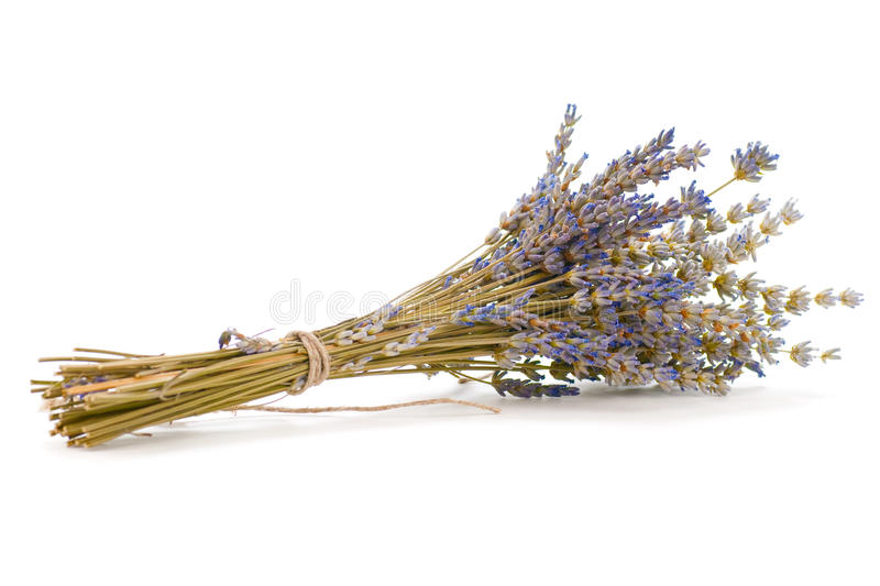 Download Bunch of lavender stock photo. Image of white, bouquet - 22938902