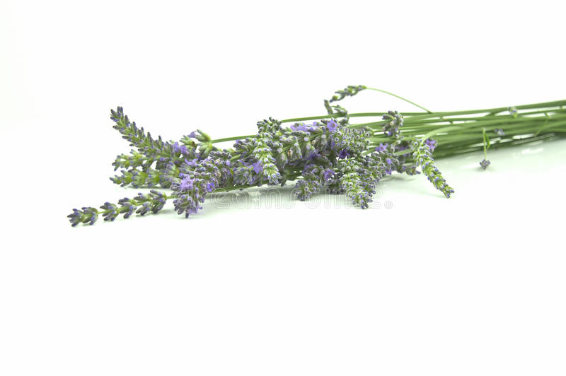 Download Bunch of lavender stock image. Image of flower, healthy - 26365587