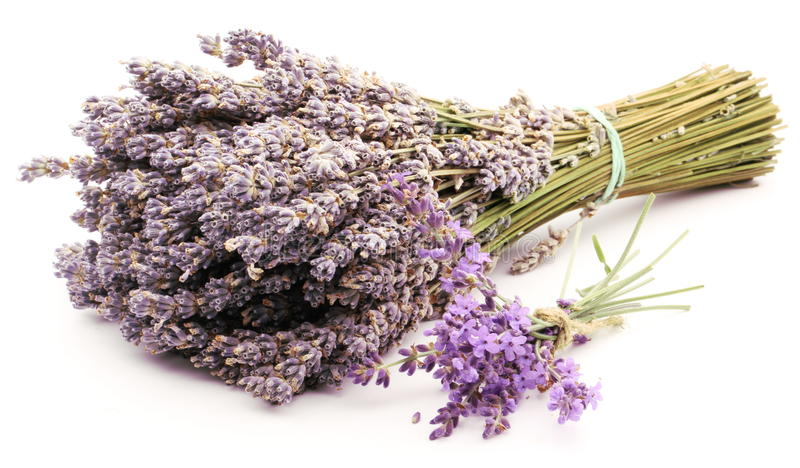 Bunch of lavender. royalty free stock images