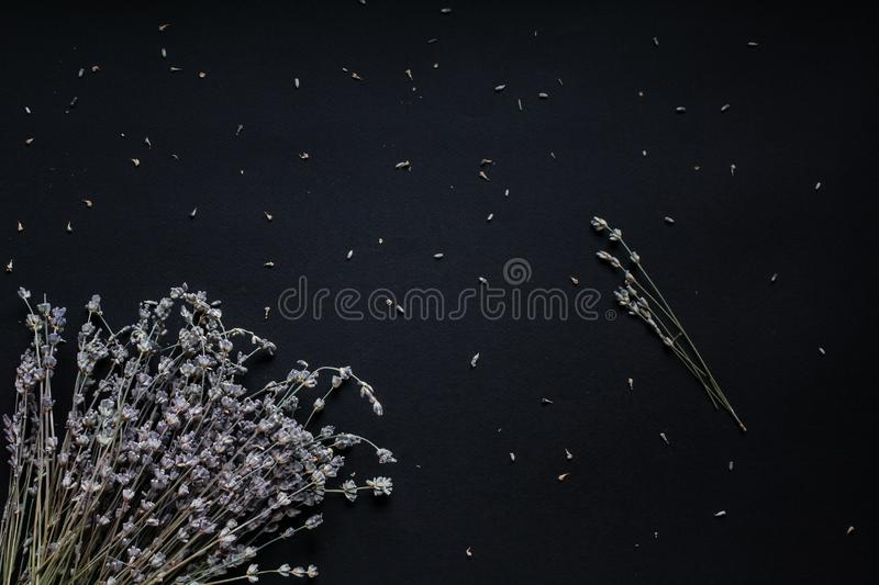 Bouquet of lavender on a black background royalty free stock images