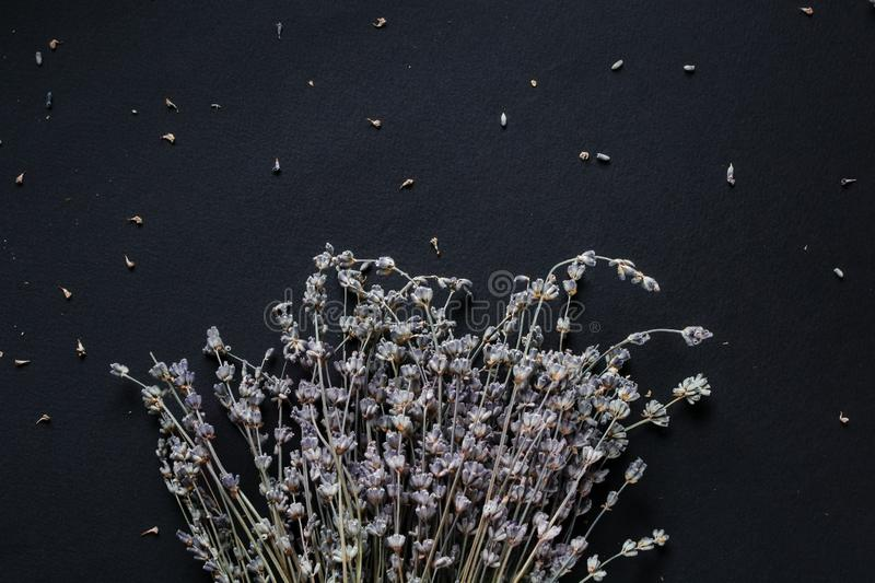 Bouquet of lavender on a black background royalty free stock image