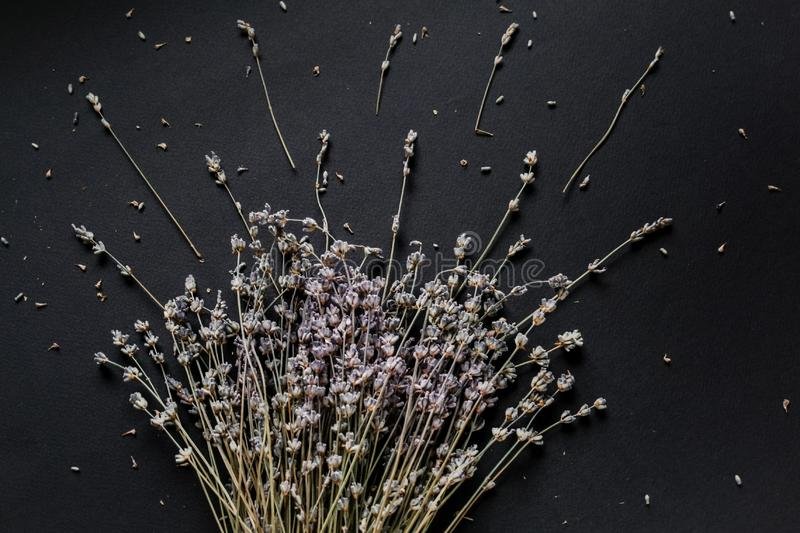 Bouquet of lavender on a black background royalty free stock photo