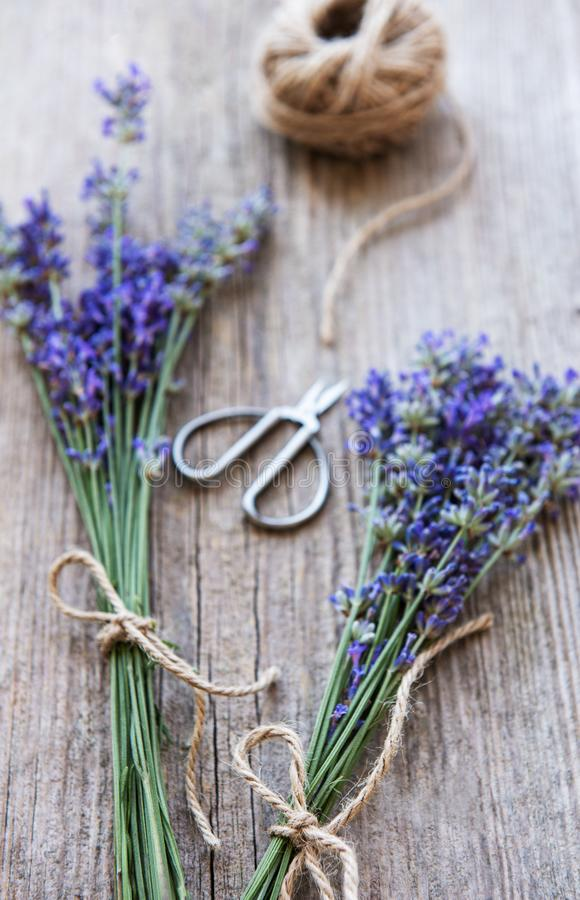 Bunch of lavender royalty free stock images