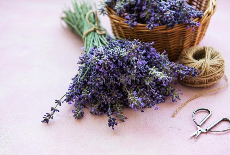 Bunch Lavender Stock Photos - Download 24,537 Royalty Free ...