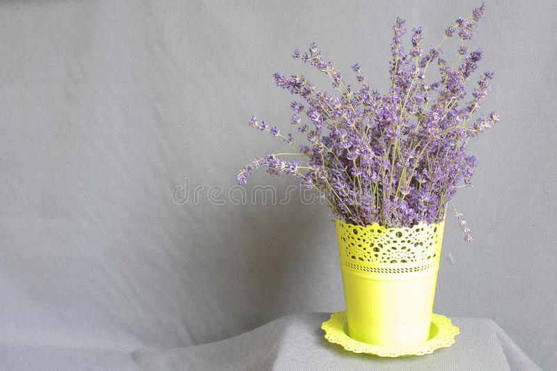 Bunch of lavender in a pot royalty free stock photo