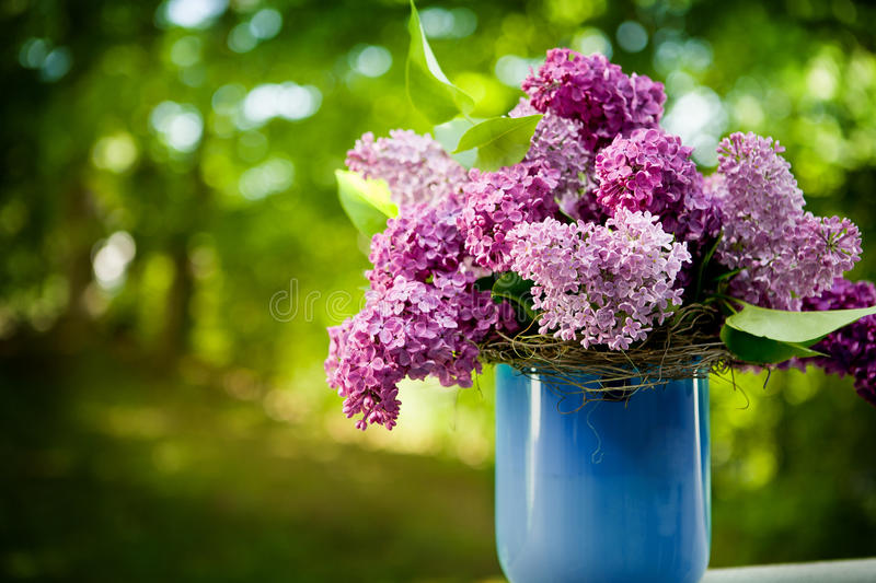 Bunch of lilac flowers. In front of garden stock photos