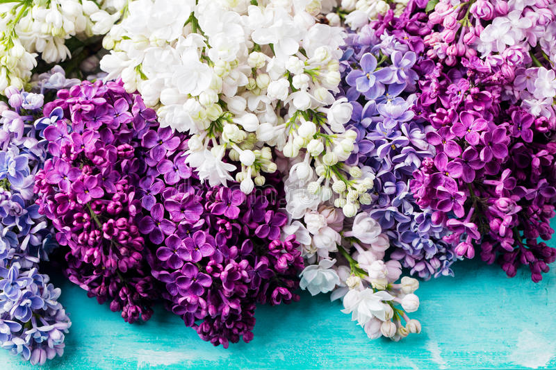 Bunch of lilac flowers on a turquoise background. Top view. Copy space royalty free stock photo
