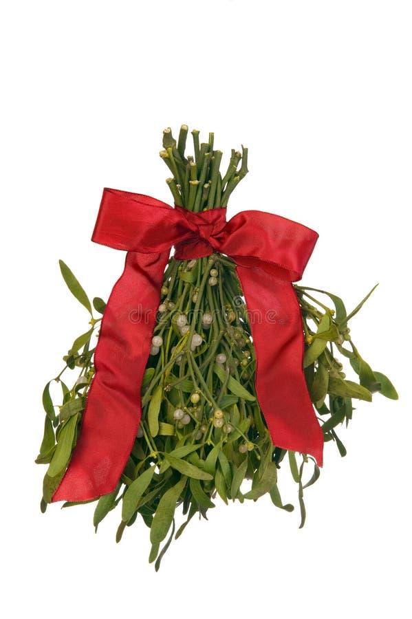 Bunch of mistletoe stock photos