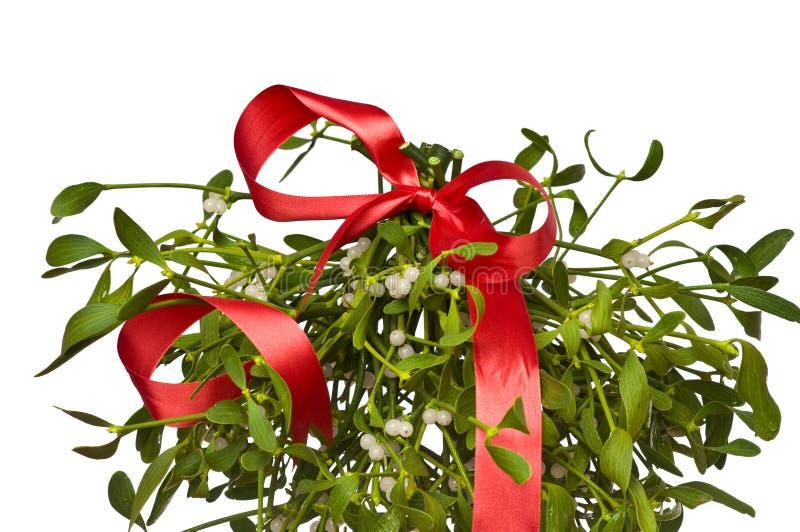 Bunch of mistletoe stock image