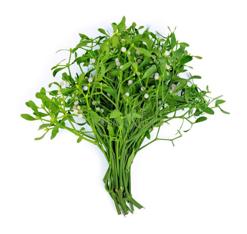 Bunch of mistletoe stock images