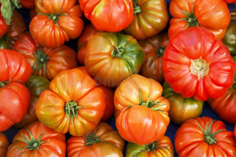 Bunch of mixed red and yellow cherry and italian tomatoes on background. Spring summer detox vegetable diet. Close up of harvest royalty free stock images