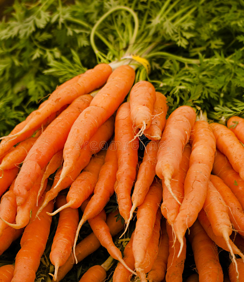 Free Bunch Of Fresh Carrots In Farmer S Market Stock Image - 14495371