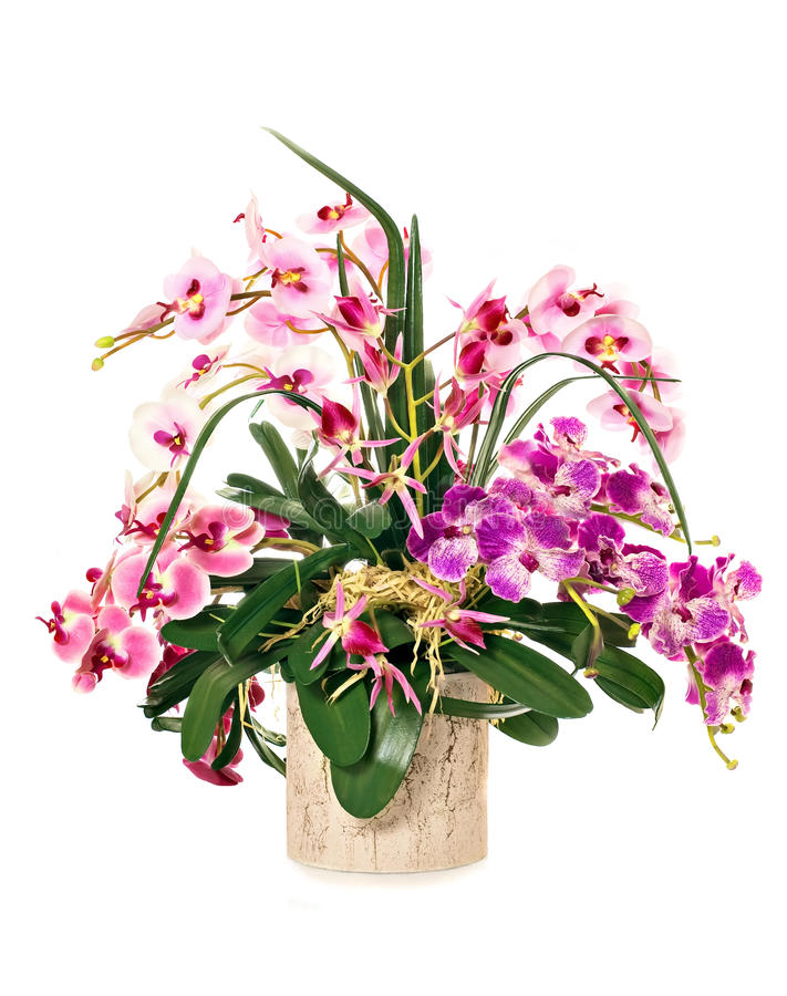 Free Bunch Of Orchids Royalty Free Stock Photo - 17862005