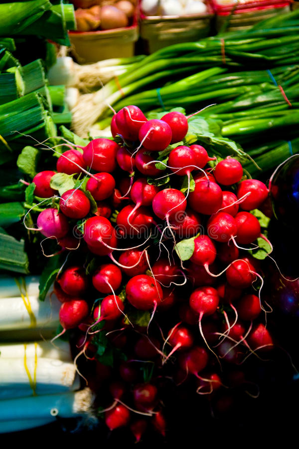 Free Bunch Of Radish And Onions Stock Photos - 16643633