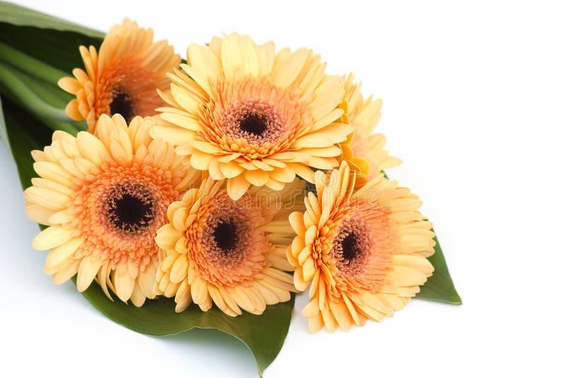 Bunch of orange gerbera daisies stock image