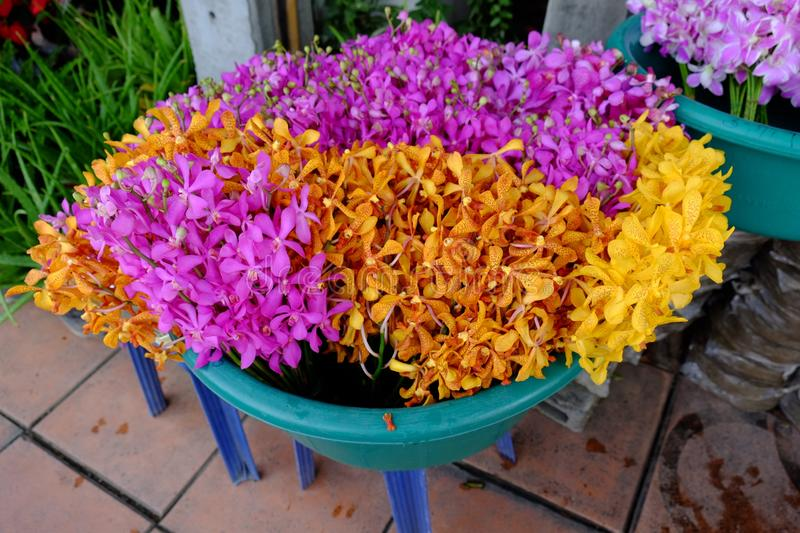 Bunch of orchids royalty free stock images