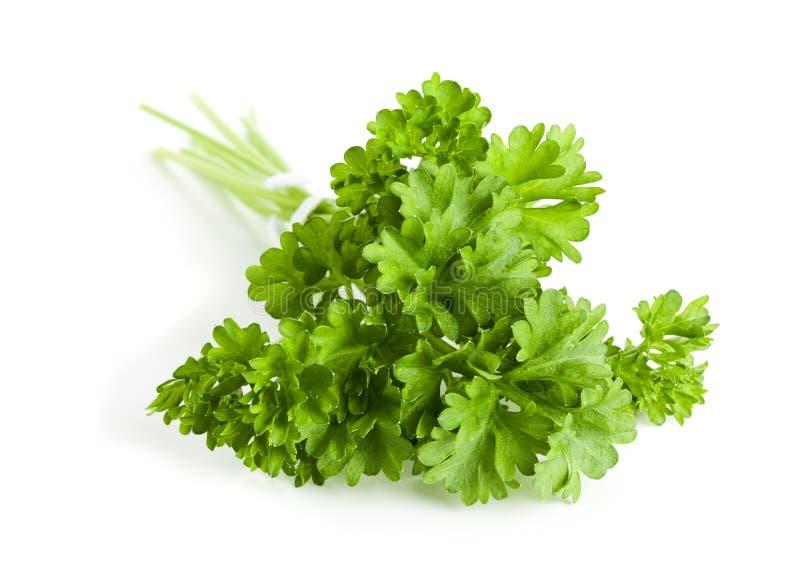 Download Bunch of parsley stock photo. Image of crispum, ingredient - 19043006