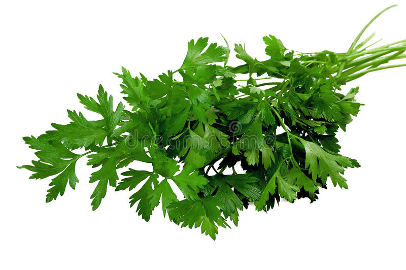 Download Bunch of parsley stock image. Image of leaf, cooking - 22670021