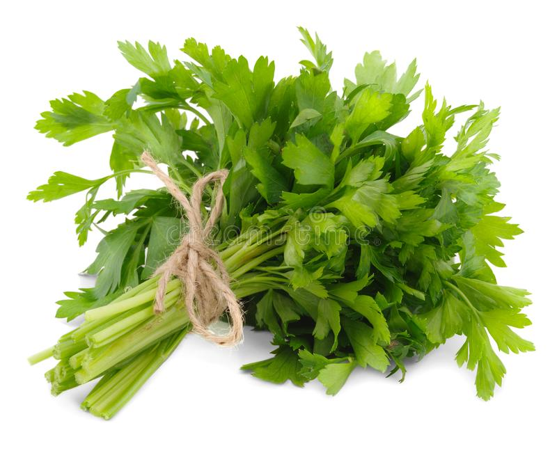 A bunch of parsley. Close-up. Isolated on white background. royalty free stock photography
