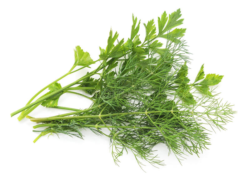 A bunch of parsley and dill. A bunch of parsley and dill on white background royalty free stock photo
