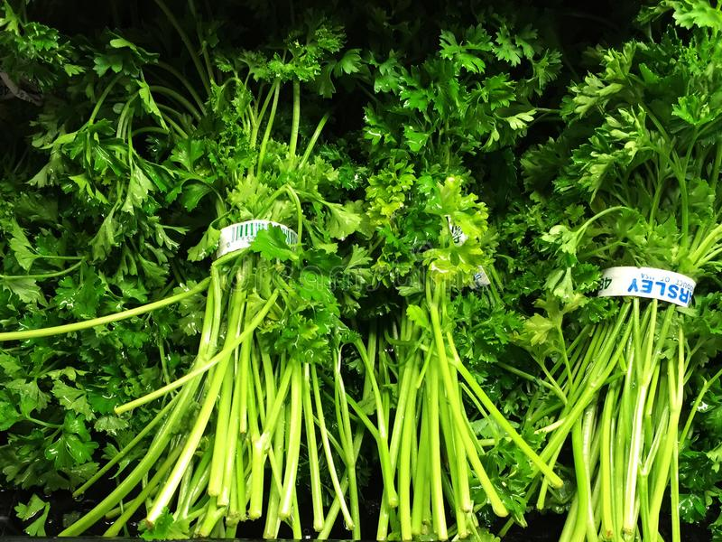 Bunch of parsley. Bunch of green fresh parsley at local Supermarket in Gilbert, Arizona stock image