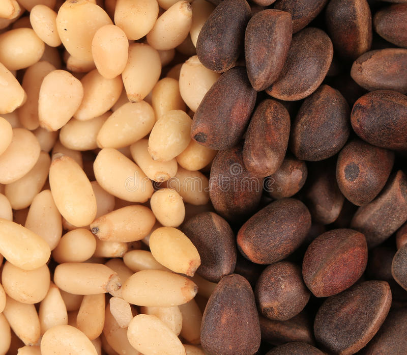 Bunch of pine nuts. royalty free stock image