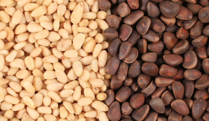 Bunch of pine nuts. Close up. royalty free stock photography