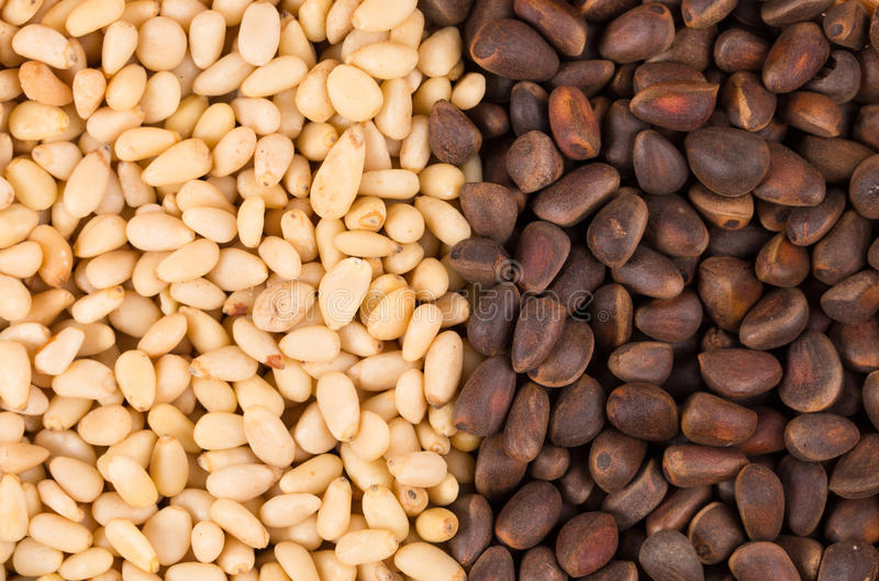 Bunch of pine nuts. Close up. royalty free stock images