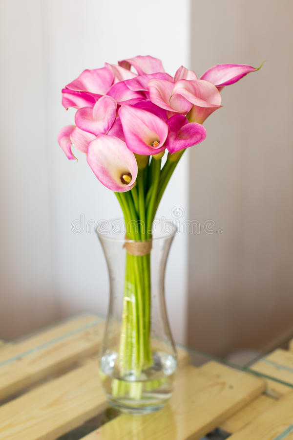 Bunch of pink callas in the vase. On white background royalty free stock photography