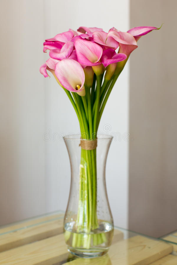 Bunch of pink callas in the vase. On white background royalty free stock photos