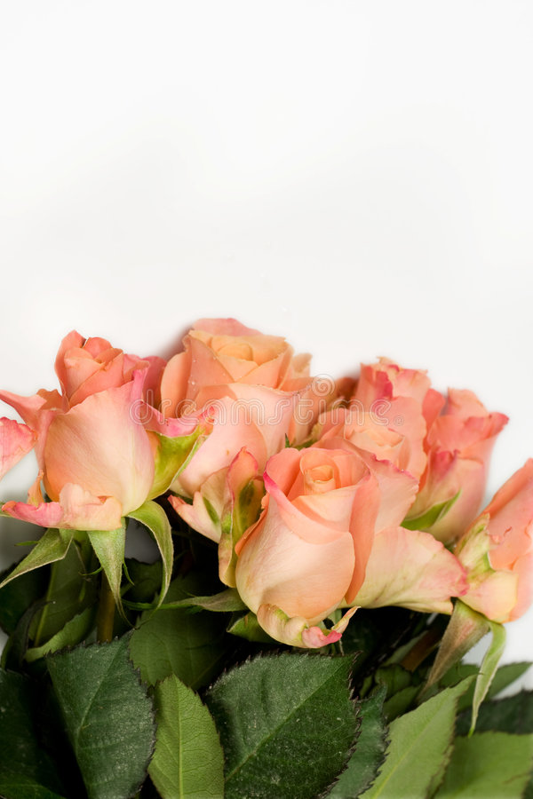 Download Bunch of pink roses stock photo. Image of invitation, anniversary - 5229892