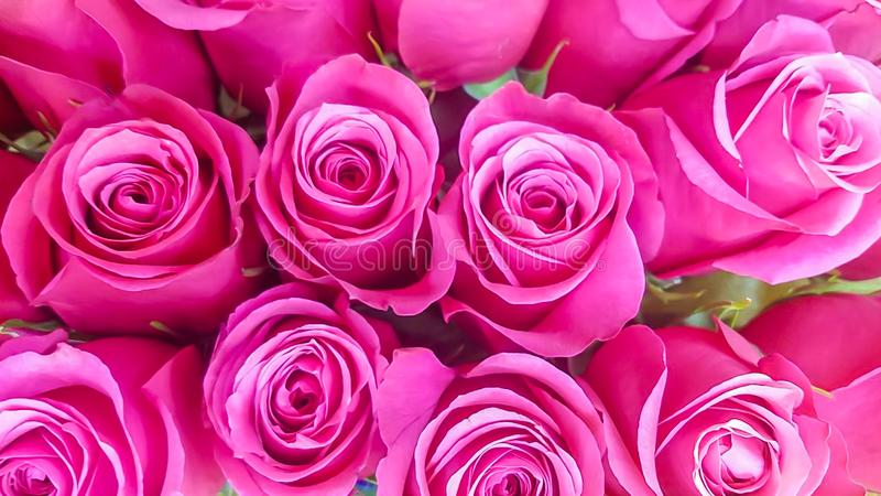 Bunch of pink roses bouquet background stock photo
