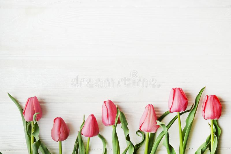 Bunch of pink tulip in beautiful spring holidays composition lying on white wooden textured table background. Mother`s day bouque stock photo