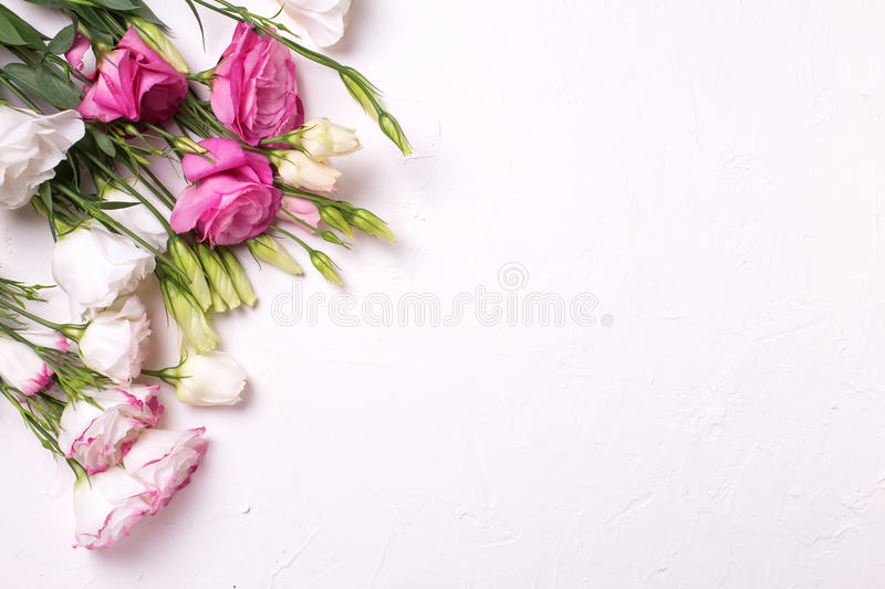 Bunch of pink and white eustoma flowers on white textured background. stock images