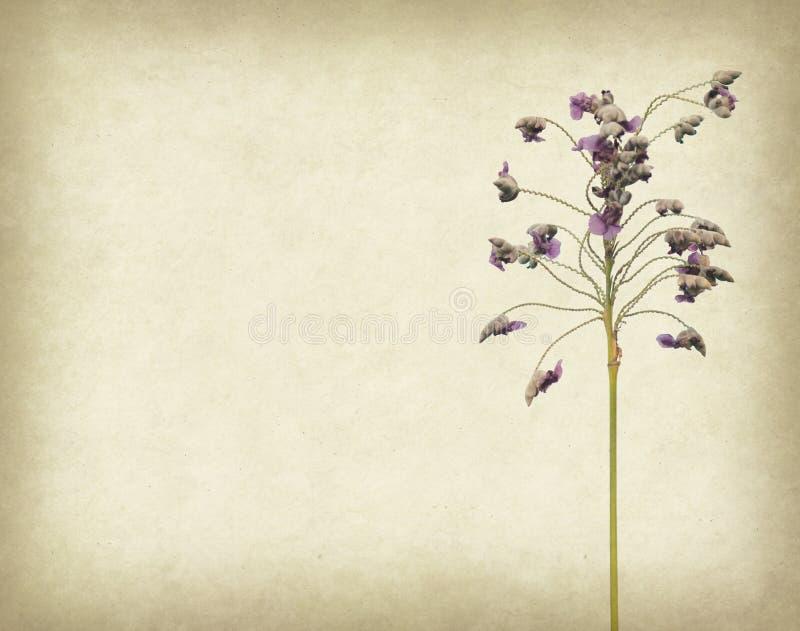 Download Bunch Of Purple Flower On Grunge Background Stock Illustration - Image: 34819502