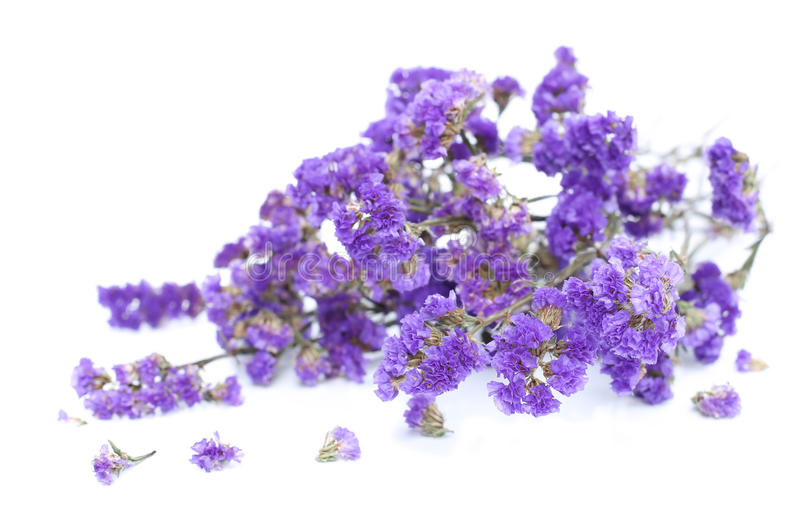 Bunch of purple flowers on white background stock photo image of download bunch of purple flowers on white background stock photo image of flowers floral mightylinksfo Choice Image