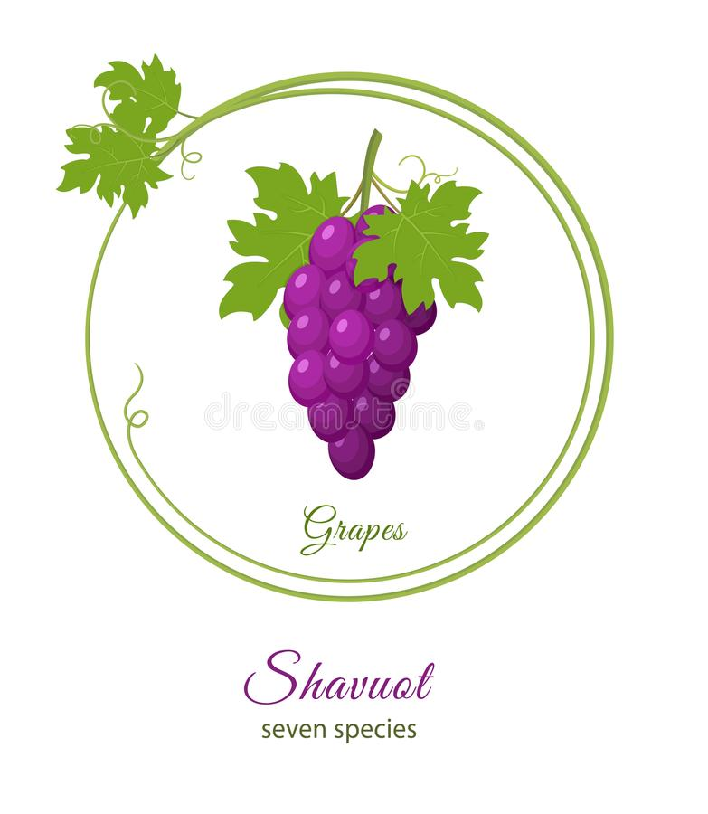 Bunch of purple grapes, holiday of Shavuot stock illustration