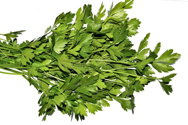 Bunch of raw parsley close up on white background isolated stock photography