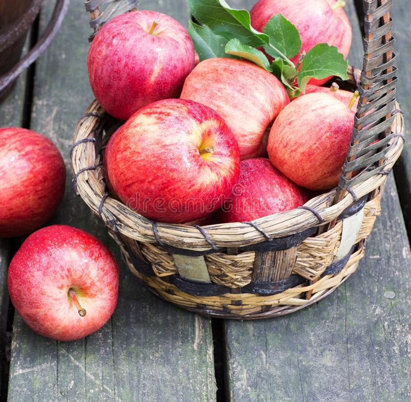 Bunch of Red Apples in a Basket. Closeup of a bunch of ripe red apples and a basket on a rustic wooden surface royalty free stock photos