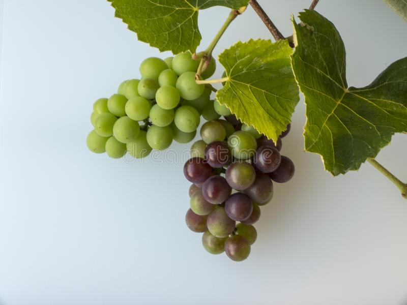 Bunch of red and black white grapes, freshly harvested with bran royalty free stock photography