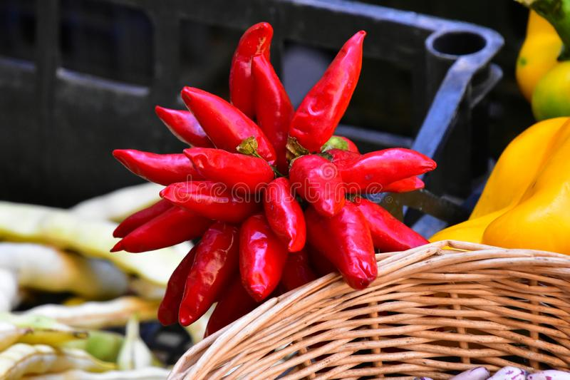 Bunch of Red Chilli Peppers, Pisa, Italy royalty free stock images