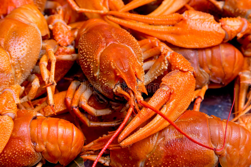 Bunch of red cooked crayfish. Closeup boiled craw fish for background uses royalty free stock photography